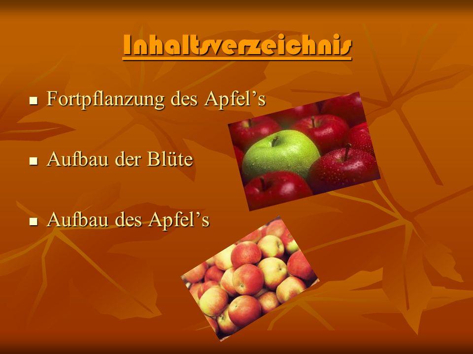 Inhaltsverzeichnis Fortpflanzung des Apfels Fortpflanzung des Apfels Aufbau der Blüte Aufbau der Blüte Aufbau des Apfels Aufbau des Apfels