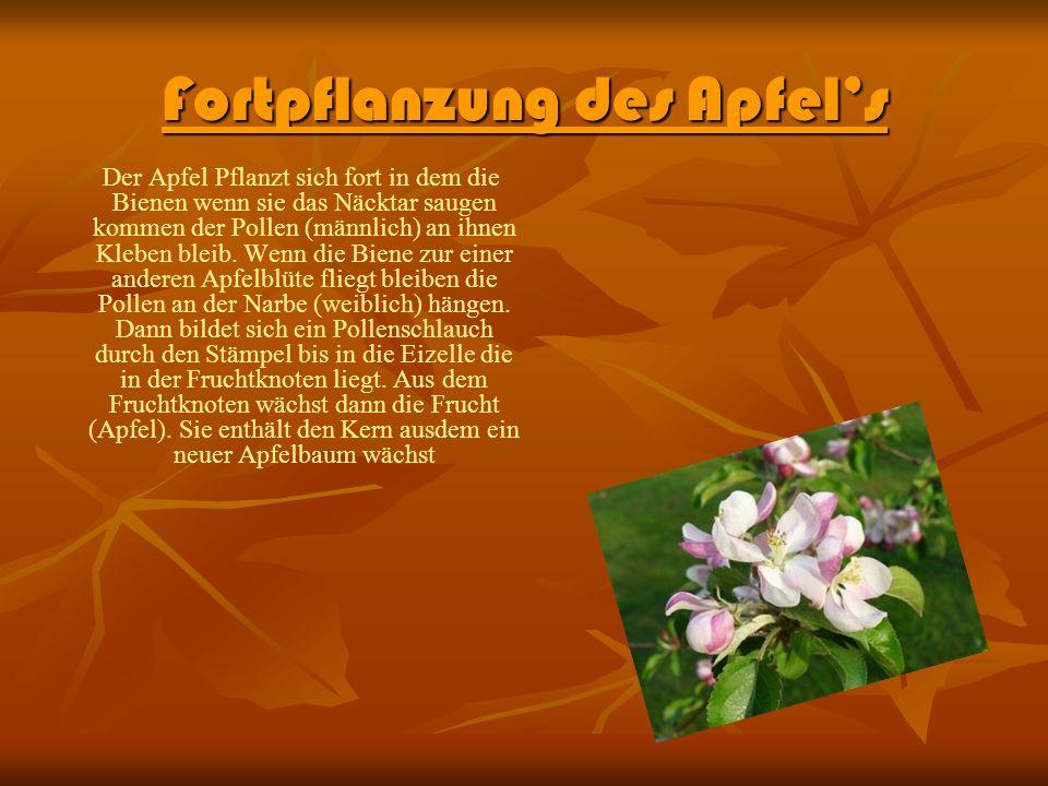 Aufbau der Blüte Die Blüte besthet aus : den Kornblättern, der Narbe, den Pollenbeuteln, der Narbe, dem Griffel, den Kelchblättern, dem Fruchtknoten, der Eizelle, dem Blütenboden, der Blütenachse.