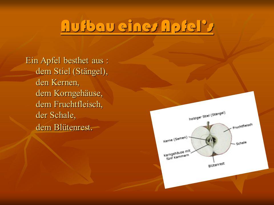 Aufbau eines Apfels Ein Apfel besthet aus : dem Stiel (Stängel), den Kernen, dem Korngehäuse, dem Fruchtfleisch, der Schale, dem Blütenrest.