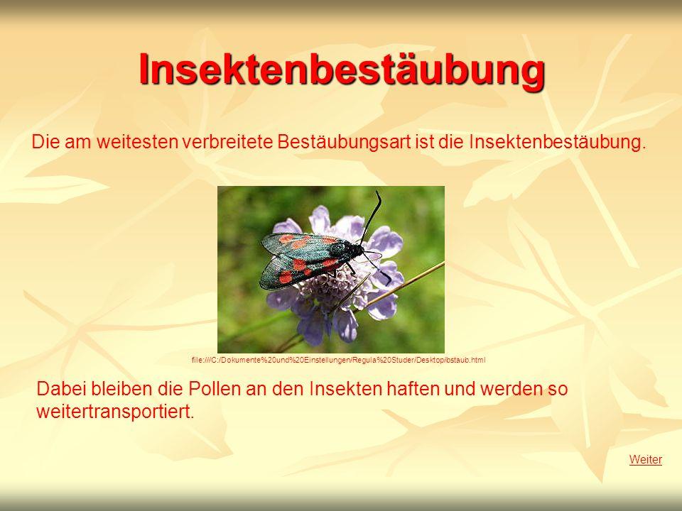 Insektenbestäubung Die am weitesten verbreitete Bestäubungsart ist die Insektenbestäubung. Weiter Dabei bleiben die Pollen an den Insekten haften und