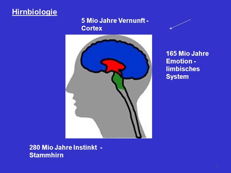 35 Das Gehirn