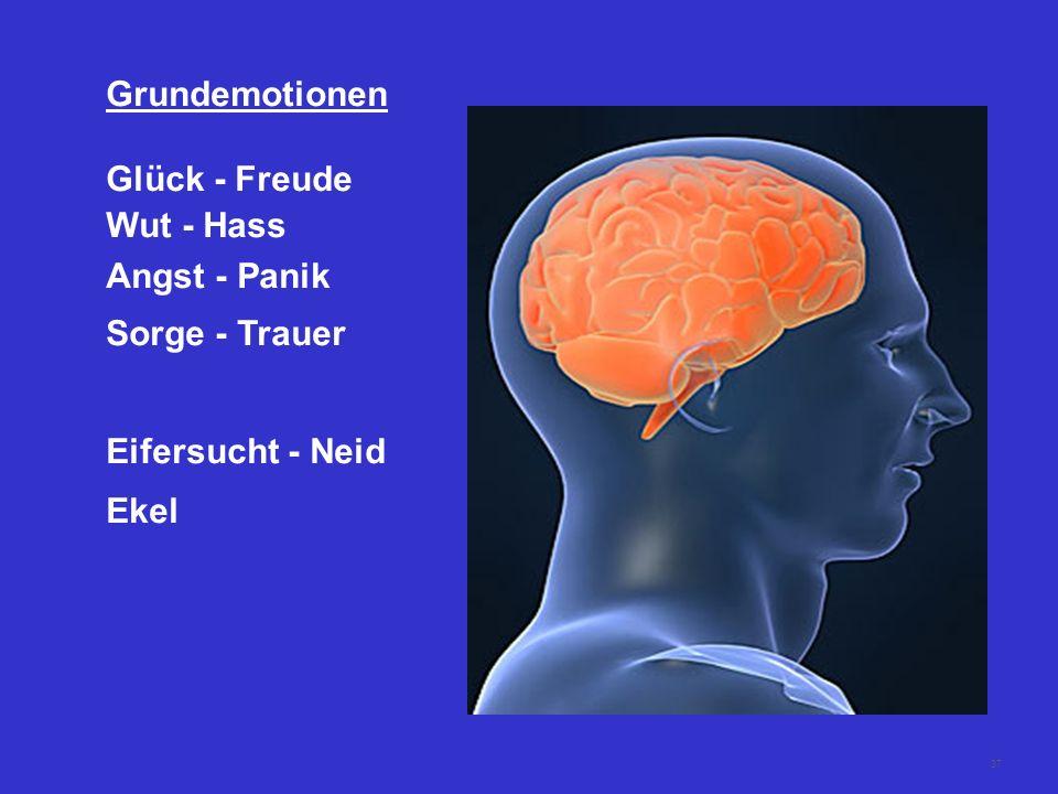 36 Hirnbiologie 280 Mio Jahre Instinkt - Stammhirn 165 Mio Jahre Emotion - limbisches System 5 Mio Jahre Vernunft - Cortex