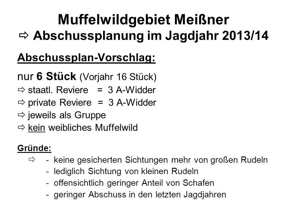 Muffelwildgebiet Meißner Abschussplanung im Jagdjahr 2013/14 Abschussplan-Vorschlag: nur 6 Stück (Vorjahr 16 Stück) staatl. Reviere = 3 A-Widder priva