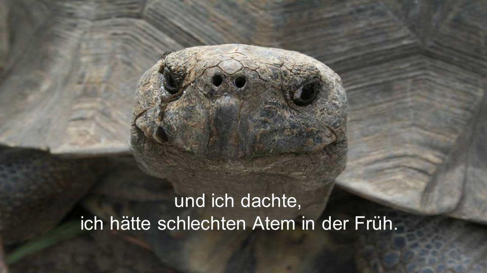 Und das Beste am Schluss? Schildkröten können durch ihren Hintern atmen.