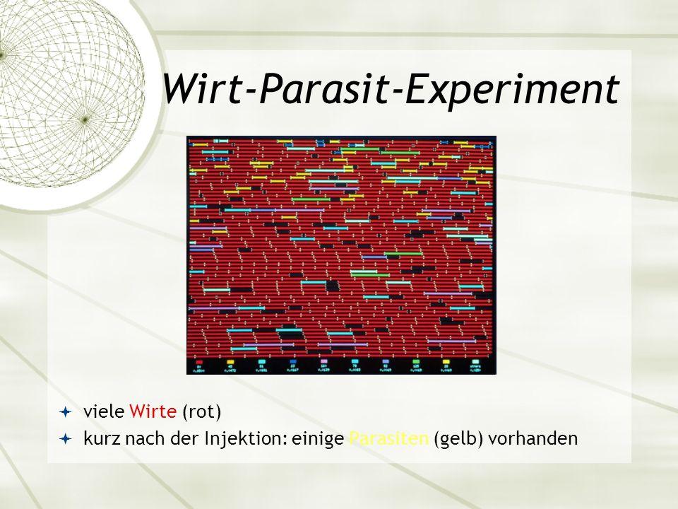 Wirt-Parasit-Experiment viele Wirte (rot) kurz nach der Injektion: einige Parasiten (gelb) vorhanden