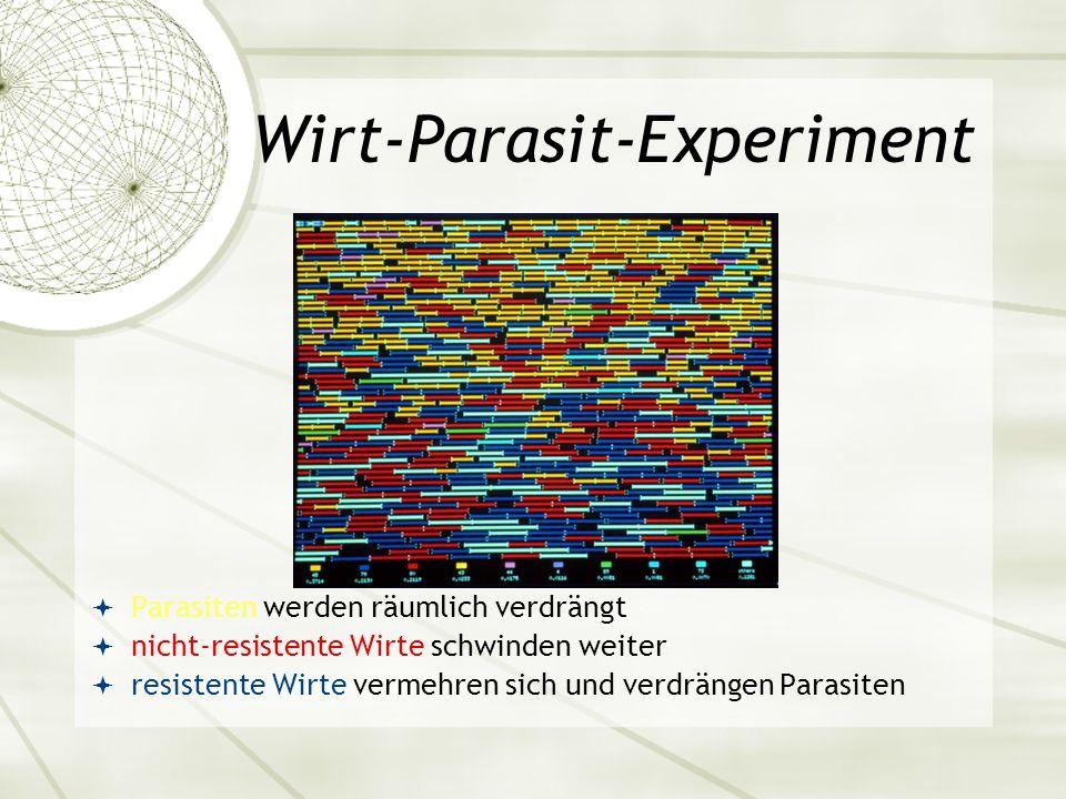 Wirt-Parasit-Experiment Parasiten werden räumlich verdrängt nicht-resistente Wirte schwinden weiter resistente Wirte vermehren sich und verdrängen Par
