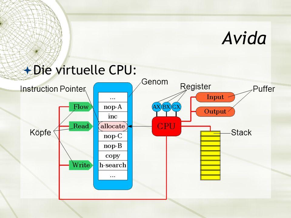 Avida Die virtuelle CPU: Köpfe Genom Register Stack Instruction PointerPuffer