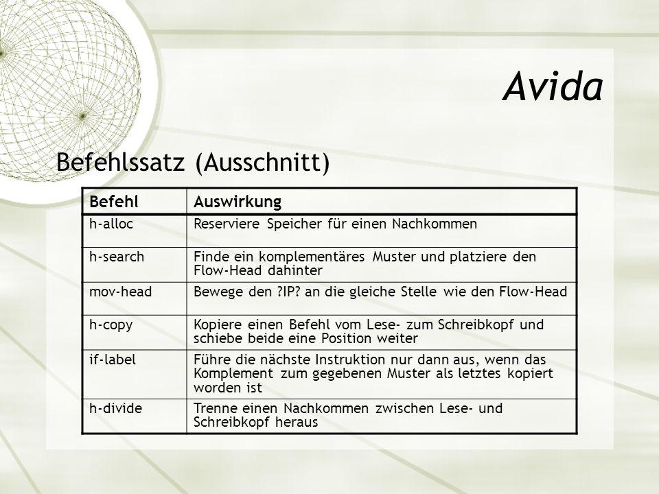 Avida Befehlssatz (Ausschnitt) BefehlAuswirkung h-allocReserviere Speicher für einen Nachkommen h-searchFinde ein komplementäres Muster und platziere
