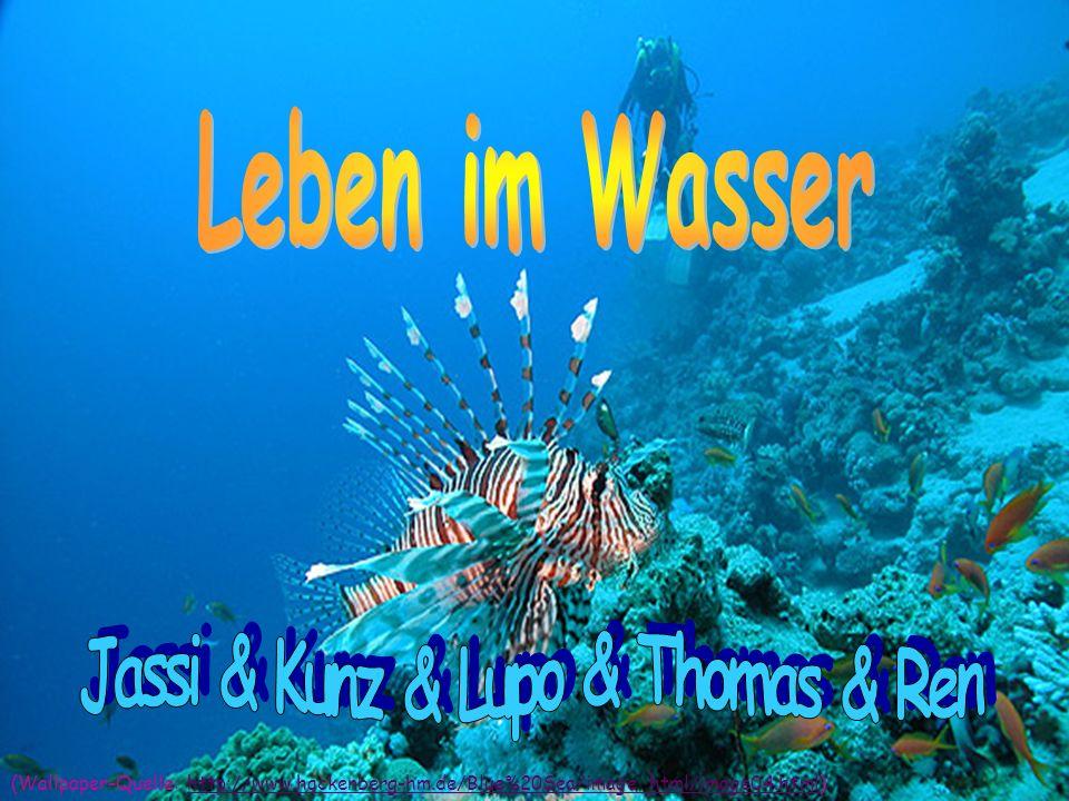 . - Abwasser - Salzwasser* & Süßwasser** - Trinkwasser & Brauchwasser & Löschwasser - Oberflächenwasser & Grundwasser - Feststoff - Schwebstoff - Wasserstoff & Sauerstoff (Wallpaper-Quelle: http://www.deokmyung.hs.kr/image/water_01.jpg)http://www.deokmyung.hs.kr/image/water_01.jpg (Text-Quelle: http://www.yahoo.at/wasser-allgemein...)http://www.yahoo.at/wasser-allgemein