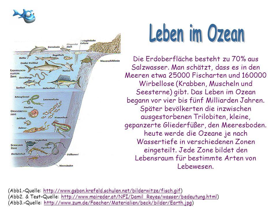 Die Erdoberfläche besteht zu 70% aus Salzwasser. Man schätzt, dass es in den Meeren etwa 25000 Fischarten und 160000 Wirbellose (Krabben, Muscheln und