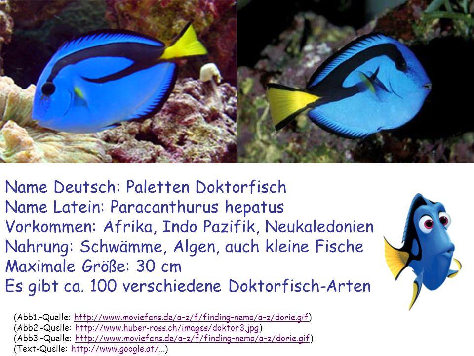 (Abb1.-Quelle: http://www.naturbilder.de/M.Mildenberger/Clownfisch.jpg)http://www.naturbilder.de/M.Mildenberger/Clownfisch.jpg (Abb2.-Quelle: http://www.lua.rlp.de/module/presse/admin/ImageManager/upload/Clownfisch.jpg)http://www.lua.rlp.de/module/presse/admin/ImageManager/upload/Clownfisch.jpg (Abb3.-Quelle: http://www.moviefans.de/a-z/f/finding-nemo/a-z/nemo.html)http://www.moviefans.de/a-z/f/finding-nemo/a-z/nemo.html (Text-Quelle: http://www.google.at/...)http://www.google.at/ Name Deutsch: Clownfisch/Anemonenfisch Name Latein: Amphiprion ocellaris Vorkommen: Östlicher indische Ozean bis Westpazifik Nahrung: Kleinst-Lebewesen wie Plankton, Algen, Fischbrut Maximale Größe: ca.