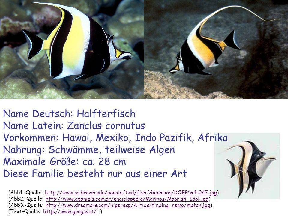 (Wallpaper-Quelle: http://www.bewie.de/Suchbar/Wasserwelt/WW1/Images/G_LR_WASSERFLOH007000JPG.JPG)