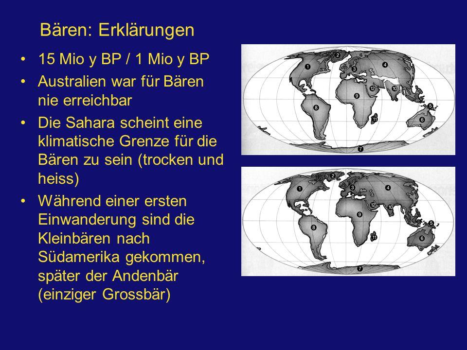 Bären: Erklärungen 15 Mio y BP / 1 Mio y BP Australien war für Bären nie erreichbar Die Sahara scheint eine klimatische Grenze für die Bären zu sein (