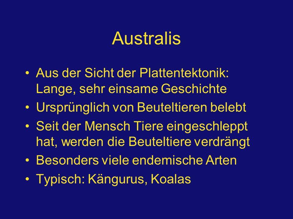 Australis Aus der Sicht der Plattentektonik: Lange, sehr einsame Geschichte Ursprünglich von Beuteltieren belebt Seit der Mensch Tiere eingeschleppt h