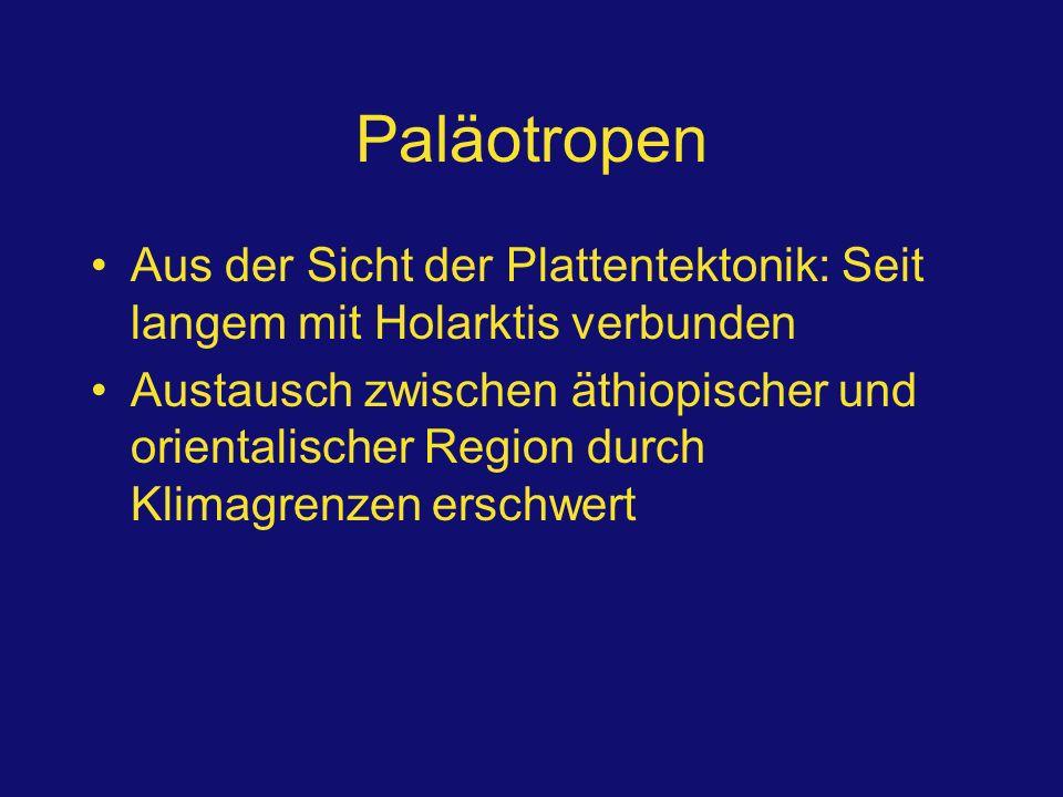 Paläotropen Aus der Sicht der Plattentektonik: Seit langem mit Holarktis verbunden Austausch zwischen äthiopischer und orientalischer Region durch Kli