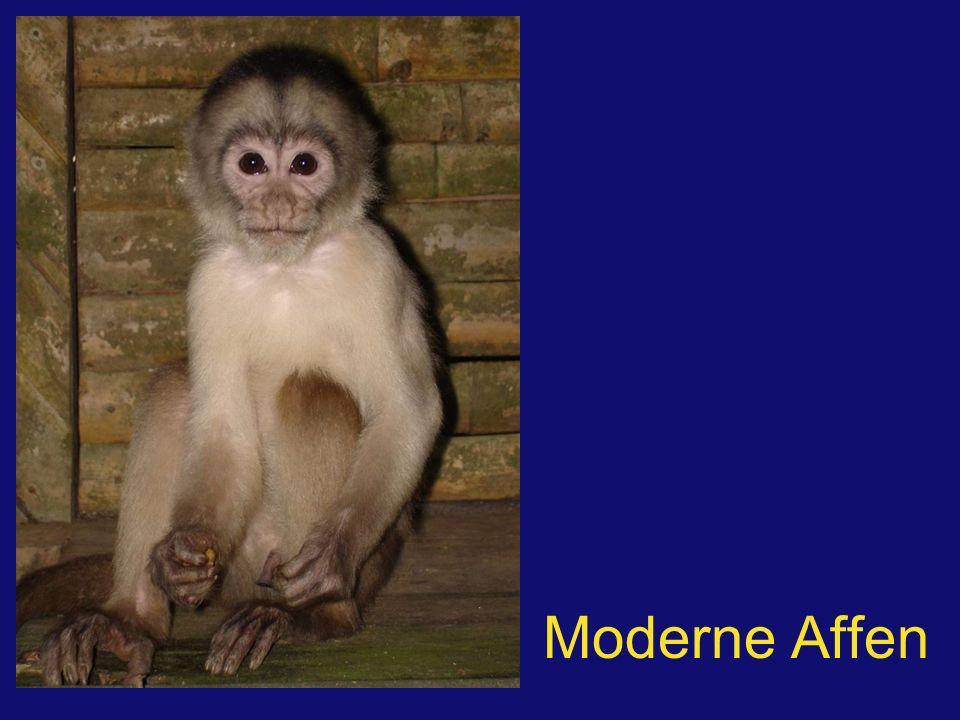 Moderne Affen