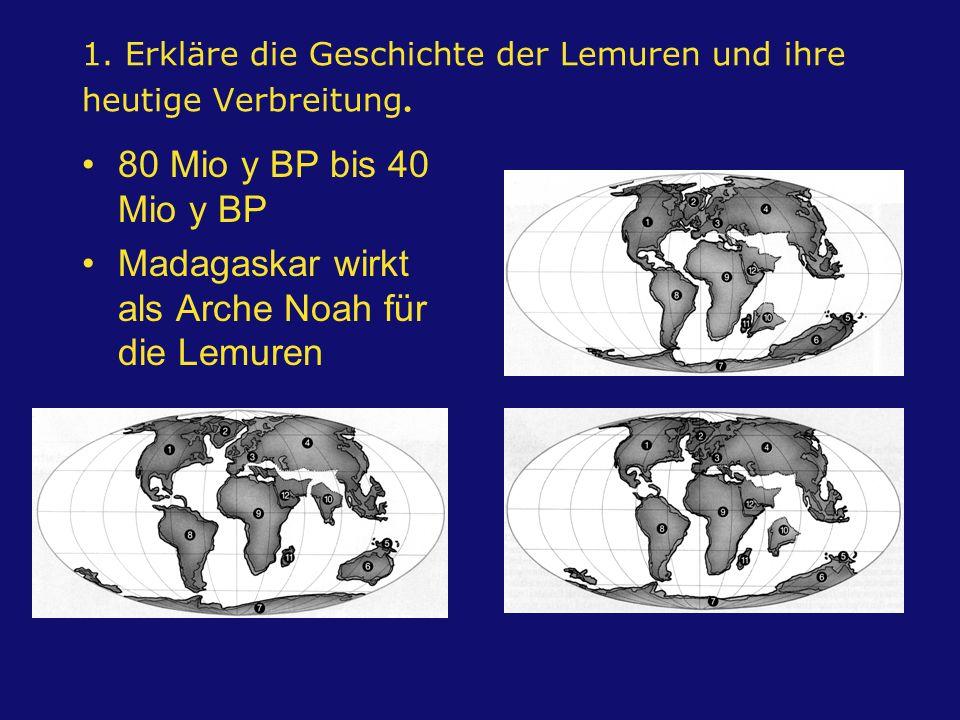 1. Erkläre die Geschichte der Lemuren und ihre heutige Verbreitung. 80 Mio y BP bis 40 Mio y BP Madagaskar wirkt als Arche Noah für die Lemuren