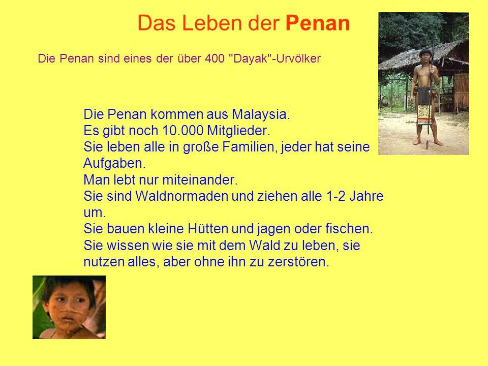 Das Leben der Penan Die Penan kommen aus Malaysia. Es gibt noch 10.000 Mitglieder. Sie leben alle in große Familien, jeder hat seine Aufgaben. Man leb