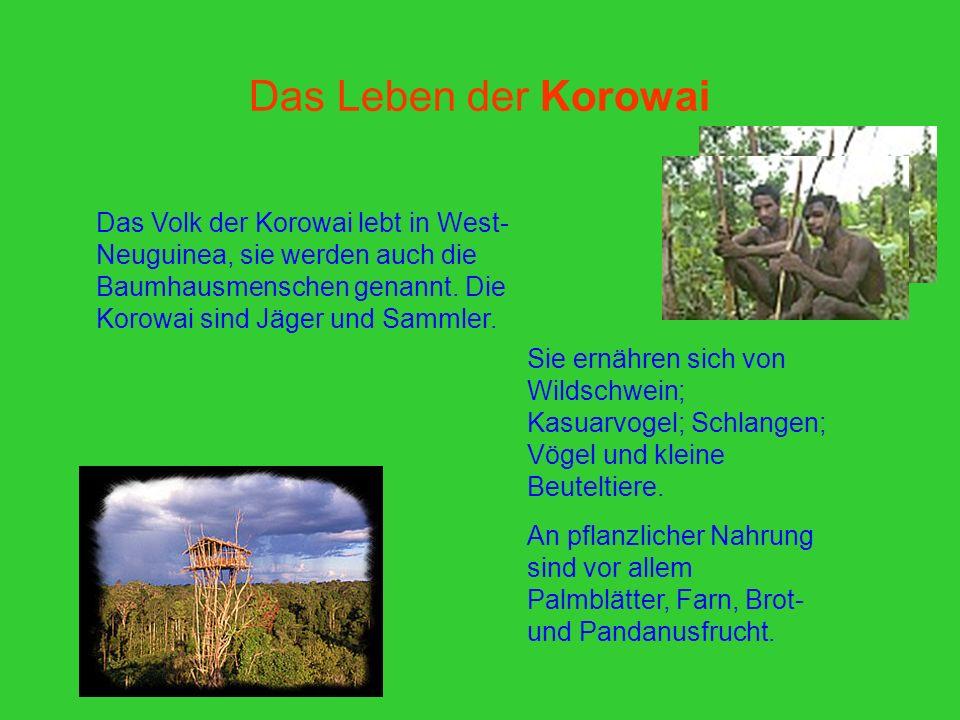 Das Leben der Korowai Das Volk der Korowai lebt in West- Neuguinea, sie werden auch die Baumhausmenschen genannt. Die Korowai sind Jäger und Sammler.