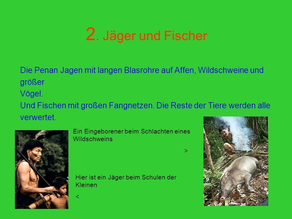2. Jäger und Fischer Traditio nelle Lebens grundl age der Penan ist neben Jagen, Fische n und dem Samm eln von über 300 verschi edene n Wildfrü chten,