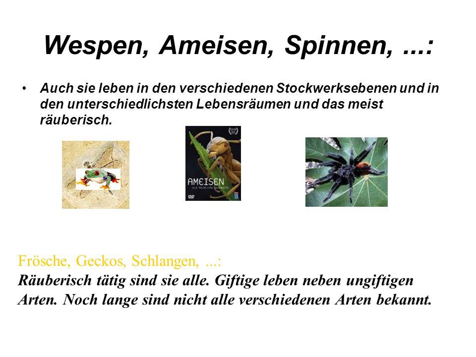 Wespen, Ameisen, Spinnen,...: Auch sie leben in den verschiedenen Stockwerksebenen und in den unterschiedlichsten Lebensräumen und das meist räuberisc