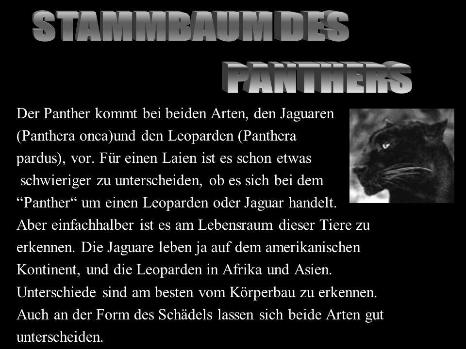 Der Panther kommt bei beiden Arten, den Jaguaren (Panthera onca)und den Leoparden (Panthera pardus), vor. Für einen Laien ist es schon etwas schwierig