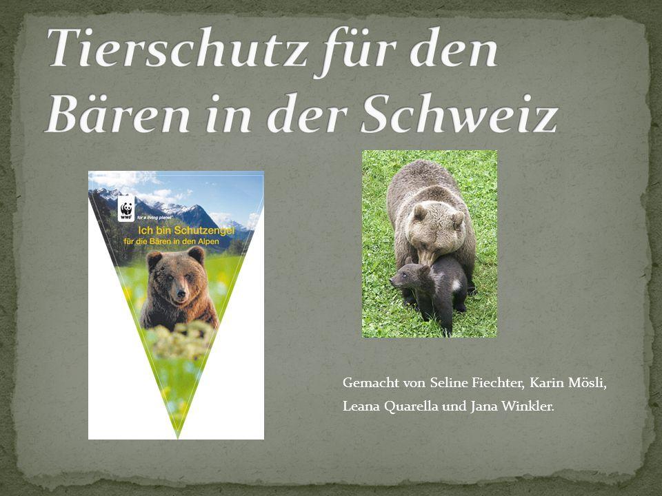 Gemacht von Seline Fiechter, Karin Mösli, Leana Quarella und Jana Winkler.