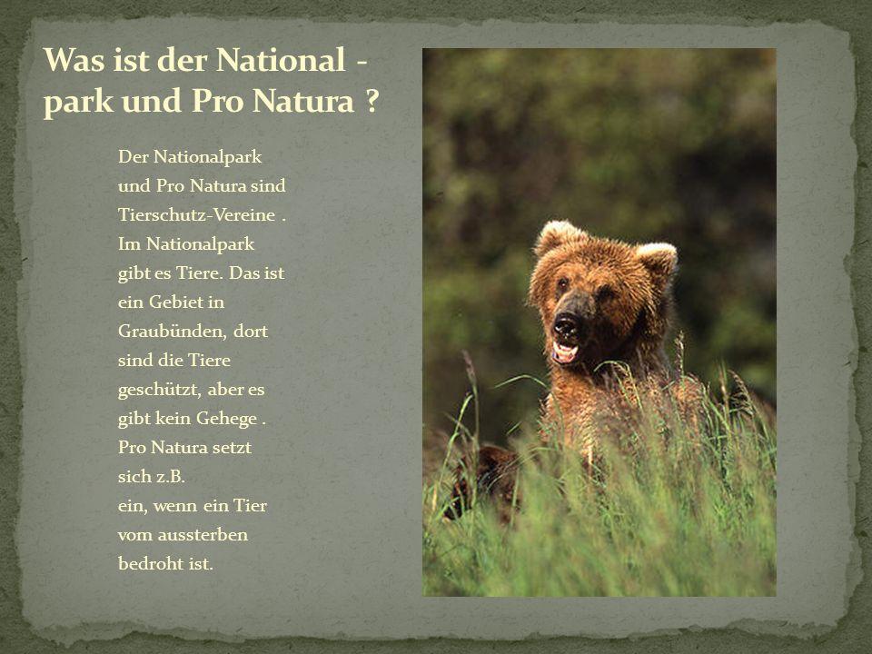 Der Nationalpark und Pro Natura sind Tierschutz-Vereine. Im Nationalpark gibt es Tiere. Das ist ein Gebiet in Graubünden, dort sind die Tiere geschütz