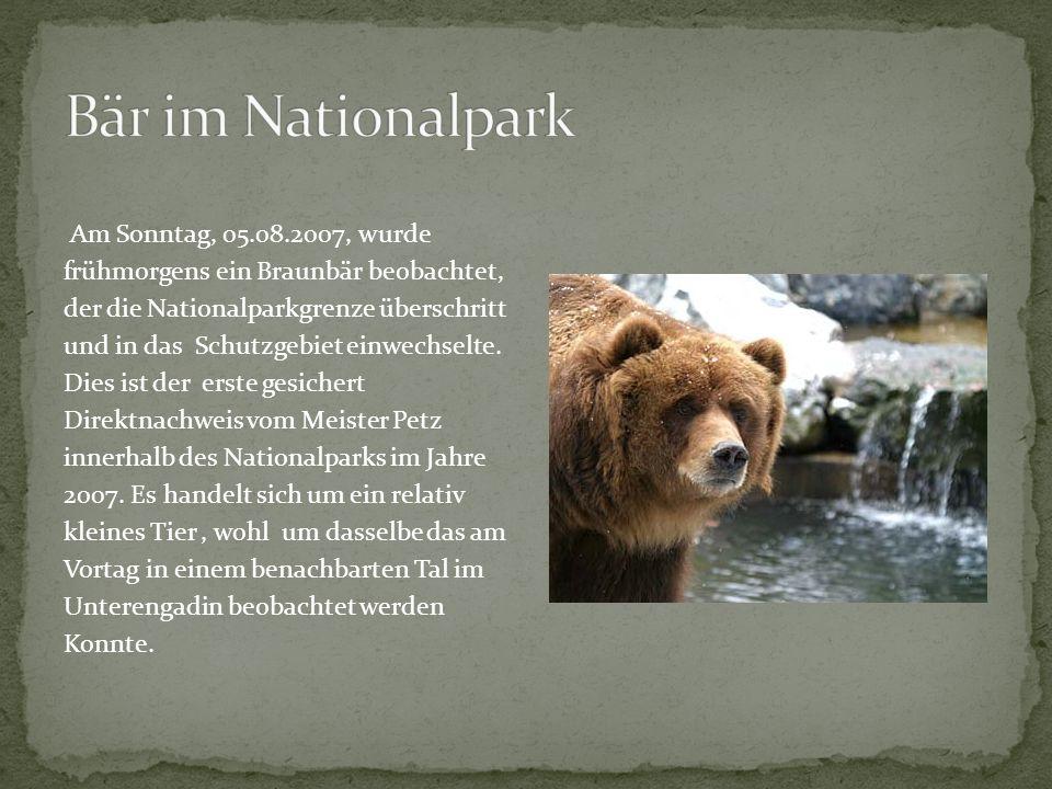 Am Sonntag, 05.08.2007, wurde frühmorgens ein Braunbär beobachtet, der die Nationalparkgrenze überschritt und in das Schutzgebiet einwechselte. Dies i