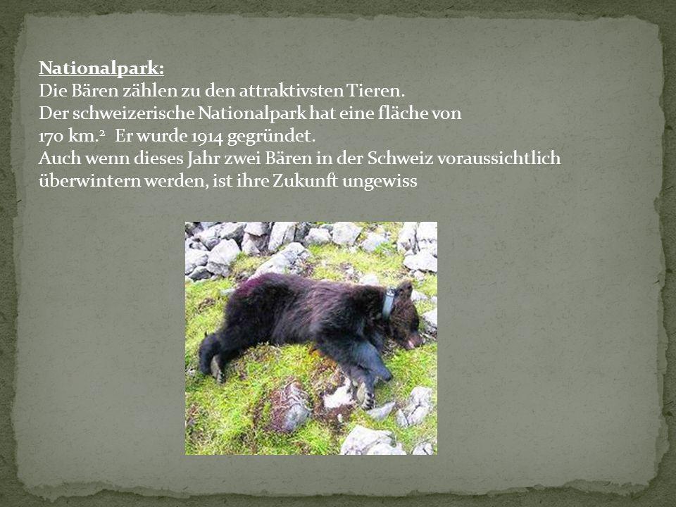 Nationalpark: Die Bären zählen zu den attraktivsten Tieren. Der schweizerische Nationalpark hat eine fläche von 170 km. 2 Er wurde 1914 gegründet. Auc
