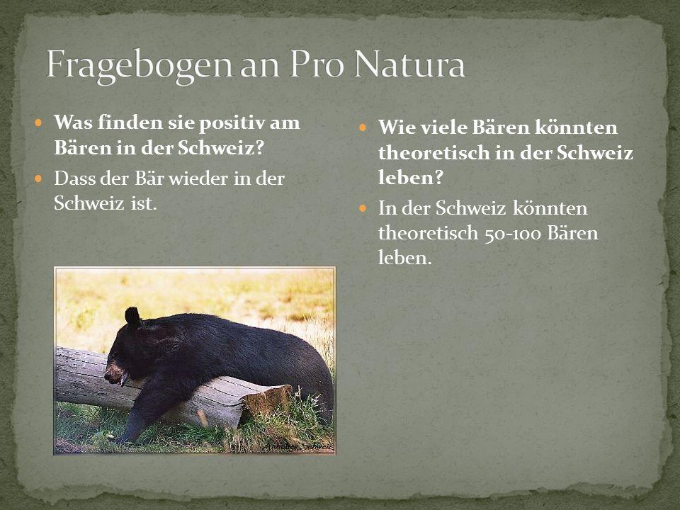 Was finden sie positiv am Bären in der Schweiz? Dass der Bär wieder in der Schweiz ist. Wie viele Bären könnten theoretisch in der Schweiz leben? In d