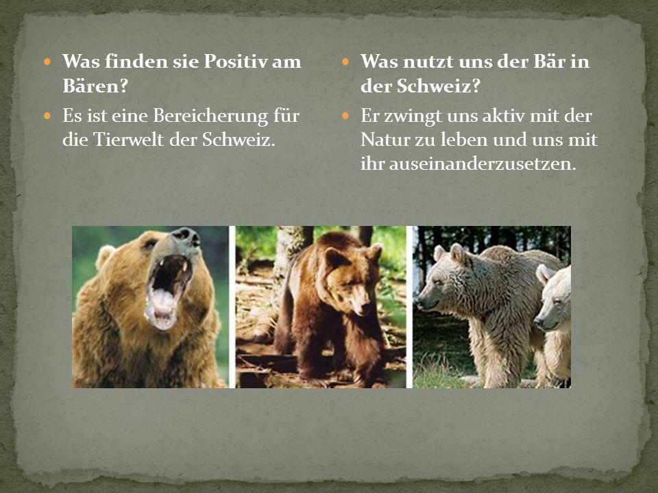 Was finden sie Positiv am Bären? Es ist eine Bereicherung für die Tierwelt der Schweiz. Was nutzt uns der Bär in der Schweiz? Er zwingt uns aktiv mit