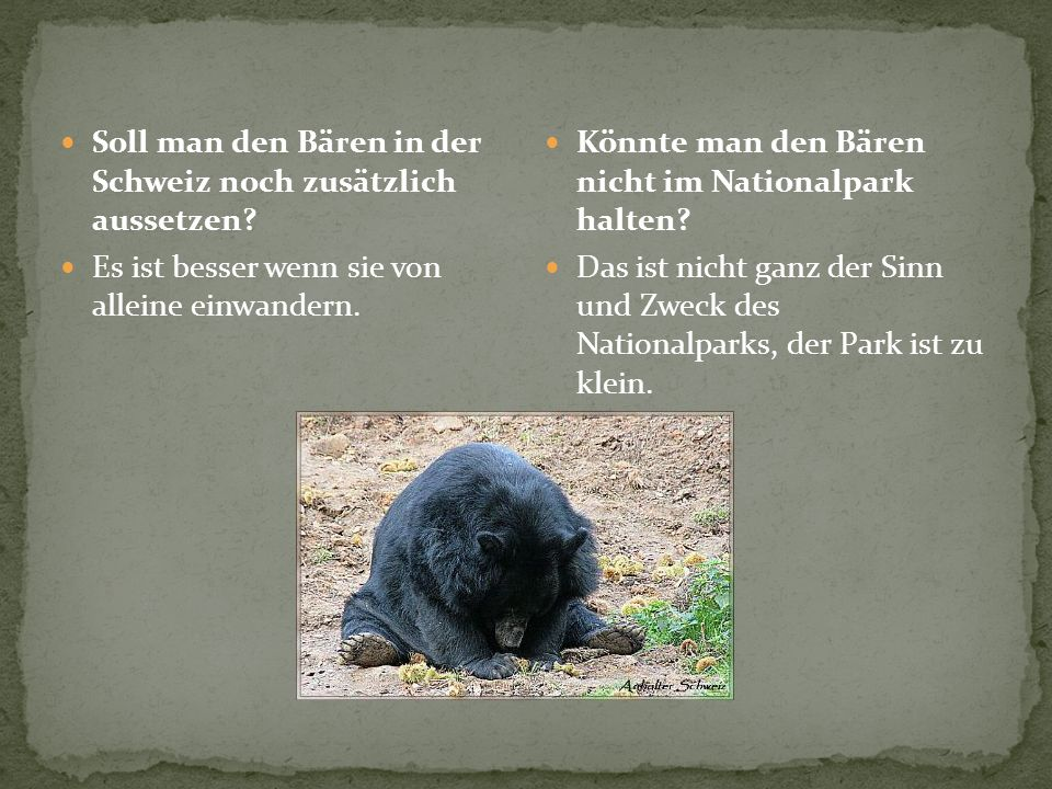 Soll man den Bären in der Schweiz noch zusätzlich aussetzen? Es ist besser wenn sie von alleine einwandern. Könnte man den Bären nicht im Nationalpark