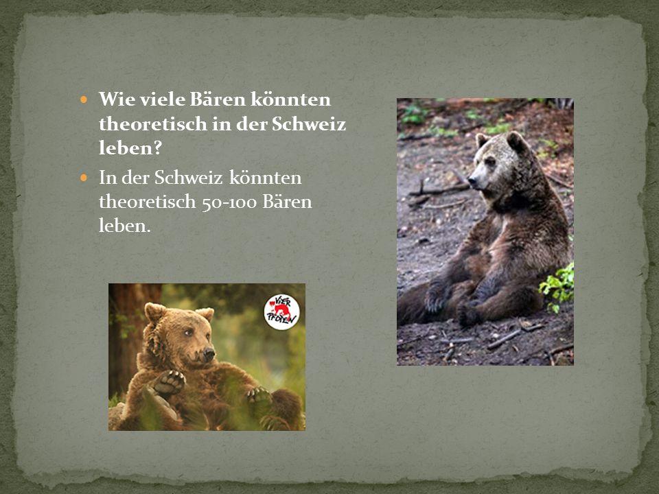 Wie viele Bären könnten theoretisch in der Schweiz leben? In der Schweiz könnten theoretisch 50-100 Bären leben.