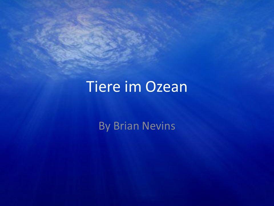 Tiere im Ozean By Brian Nevins