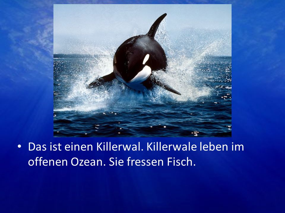 Das ist einen Killerwal. Killerwale leben im offenen Ozean. Sie fressen Fisch.
