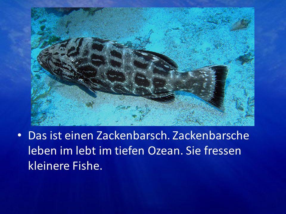 Das ist einen Zackenbarsch. Zackenbarsche leben im lebt im tiefen Ozean. Sie fressen kleinere Fishe.