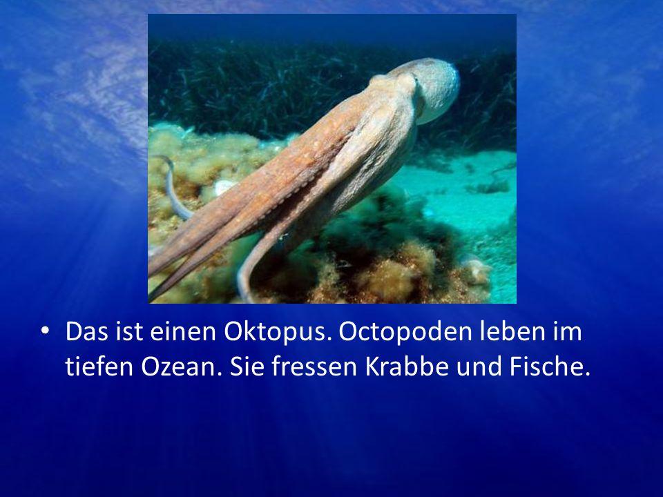 Das ist einen Oktopus. Octopoden leben im tiefen Ozean. Sie fressen Krabbe und Fische.