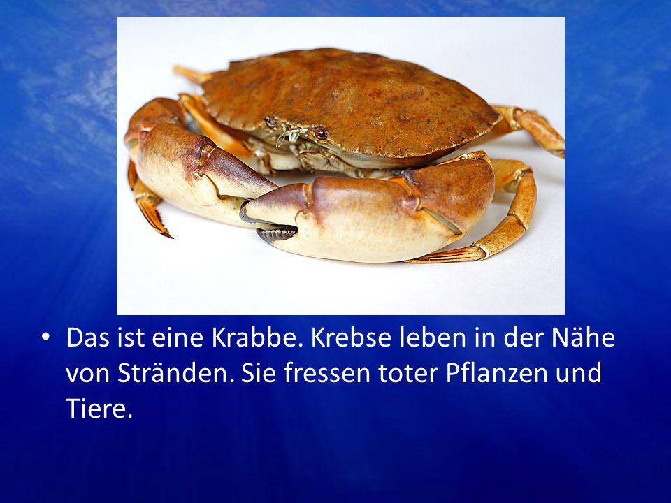 Das ist eine Krabbe. Krebse leben in der Nähe von Stränden. Sie fressen toter Pflanzen und Tiere.