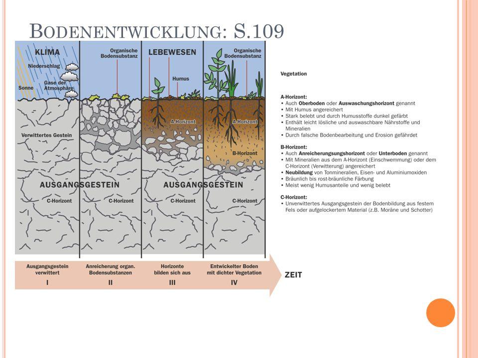 B ODENLEBEWESEN (5 % SIND E DAPHON ) Pro 1g Boden leben: 400 Mio Bakterien 0.5 Mio Pilze 0.1 Mio Algen