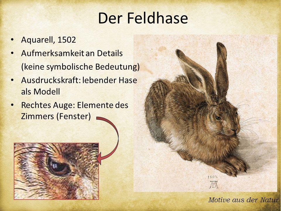 Motive aus der Natur Aquarell, 1502 Aufmerksamkeit an Details (keine symbolische Bedeutung) Ausdruckskraft: lebender Hase als Modell Rechtes Auge: Ele