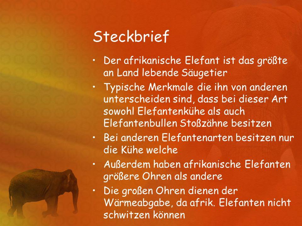 Steckbrief Der afrikanische Elefant ist das größte an Land lebende Säugetier Typische Merkmale die ihn von anderen unterscheiden sind, dass bei dieser