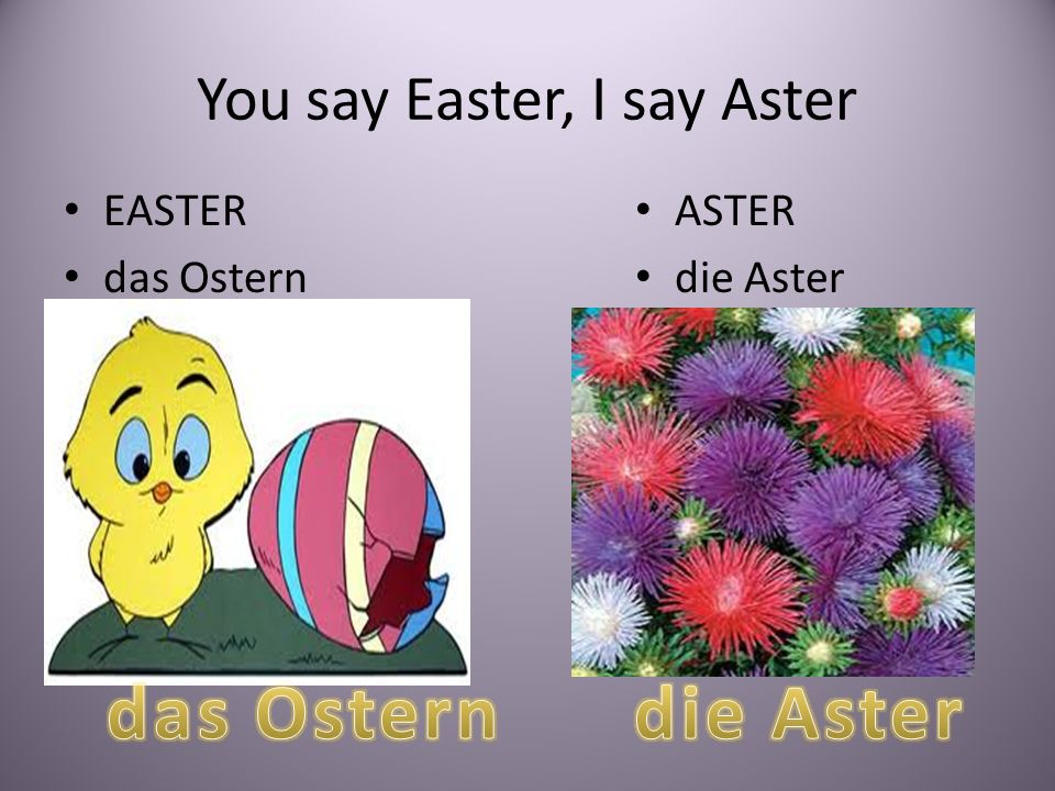 You say Easter, I say Aster EASTER das Ostern ASTER die Aster