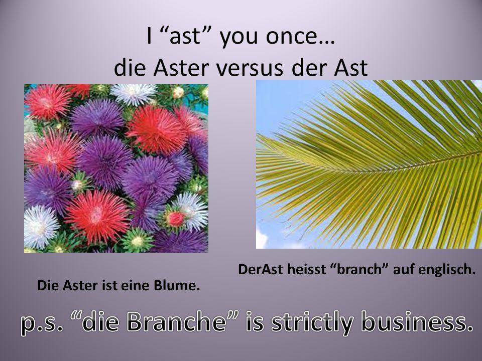 I ast you once… die Aster versus der Ast Die Aster ist eine Blume. DerAst heisst branch auf englisch.
