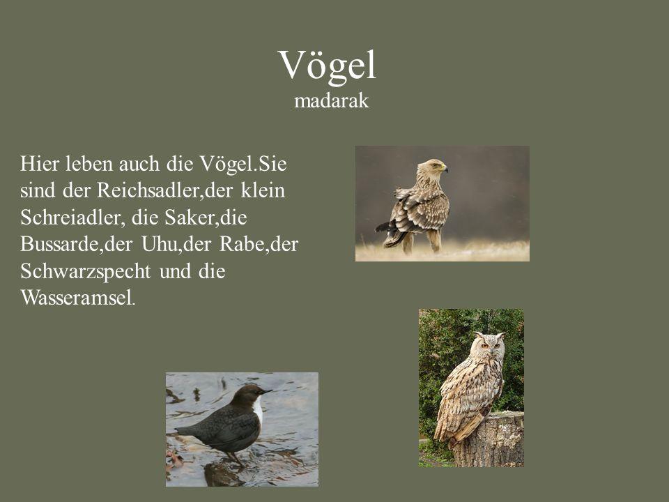 Vögel madarak Hier leben auch die Vögel.Sie sind der Reichsadler,der klein Schreiadler, die Saker,die Bussarde,der Uhu,der Rabe,der Schwarzspecht und