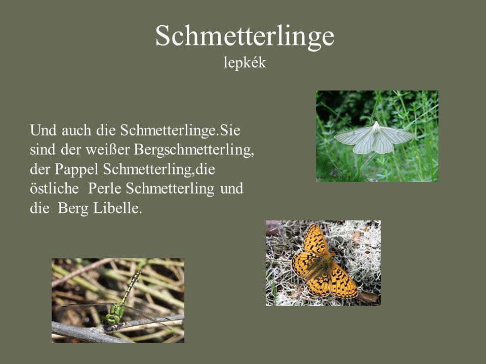 Schmetterlinge lepkék Und auch die Schmetterlinge.Sie sind der weißer Bergschmetterling, der Pappel Schmetterling,die östliche Perle Schmetterling und