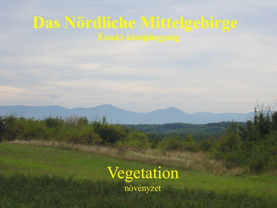 Das Nördliche Mittelgebirge Északi-középhegység Vegetation növényzet