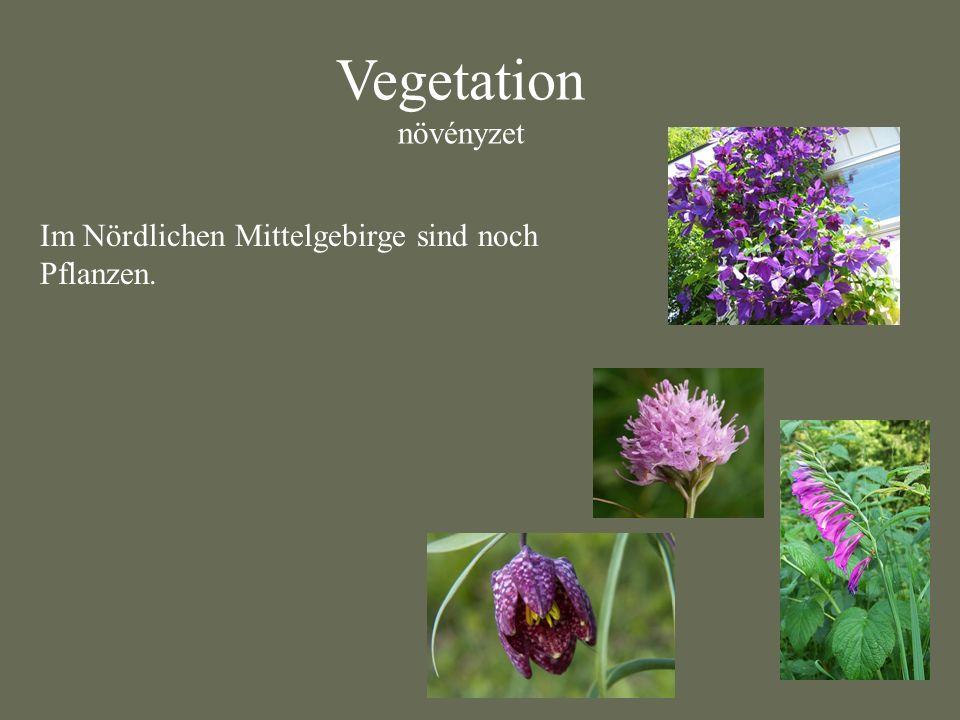 Vegetation növényzet Im Nördlichen Mittelgebirge sind noch Pflanzen.