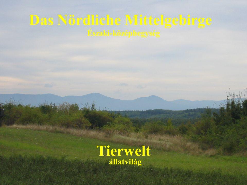 Das Nördliche Mittelgebirge Tierwelt Északi-középhegység állatvilág