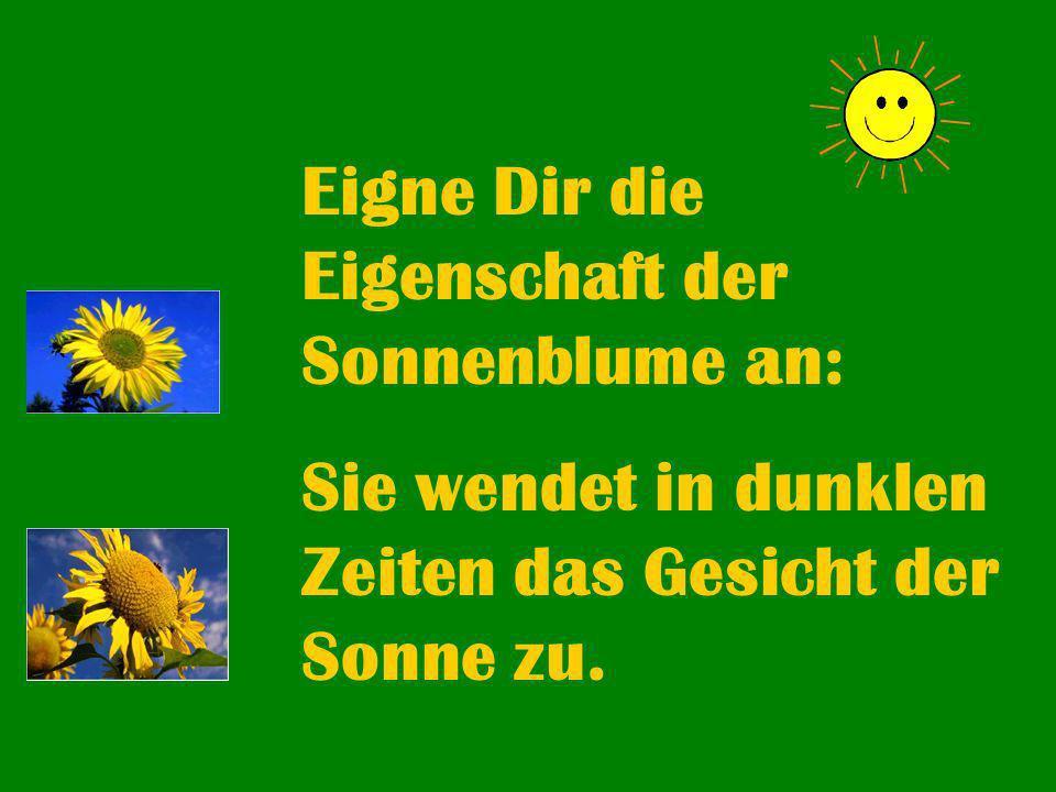 Eigne Dir die Eigenschaft der Sonnenblume an: Sie wendet in dunklen Zeiten das Gesicht der Sonne zu.
